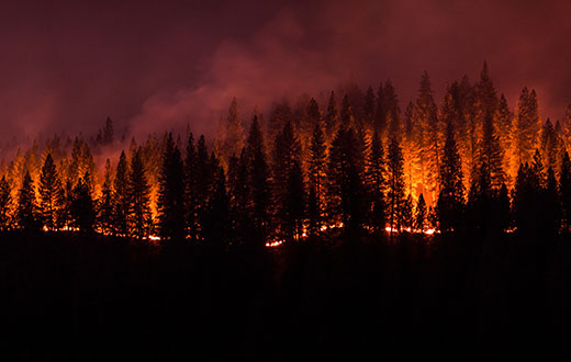 Wildfire Image
