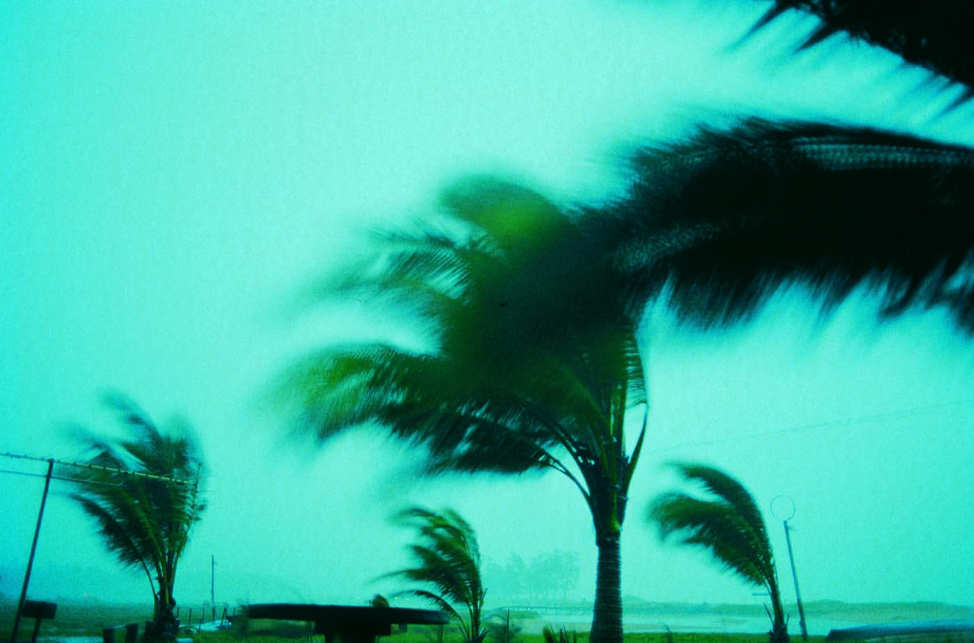a blurry image of a palm tree
