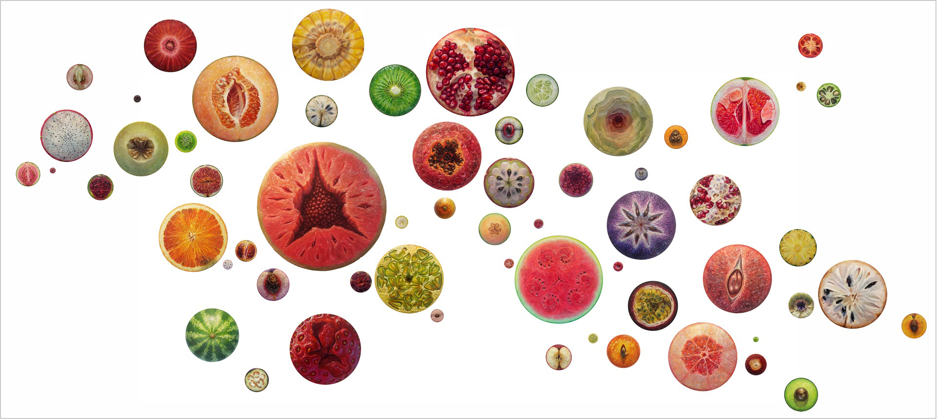 Picture of several portraits of individual fruit cross-sections of various sizes arranged in an installation.